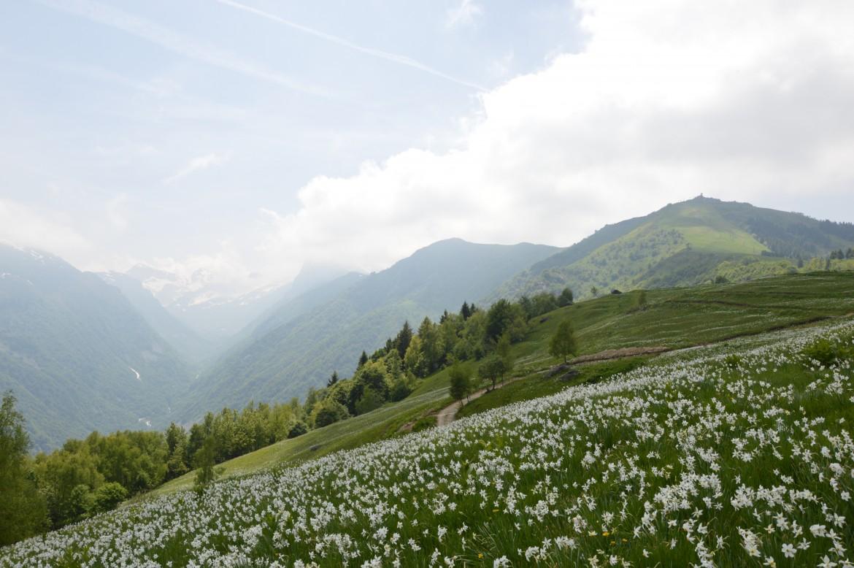 (Italiano) Giornata a cavallo sul Monte Pigna – 16 agosto