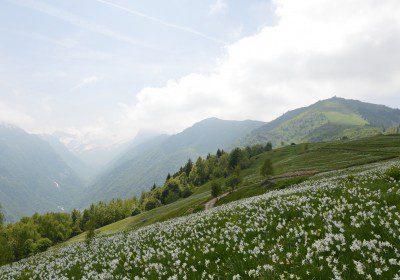 Giornata a cavallo sul Monte Pigna – 16 agosto